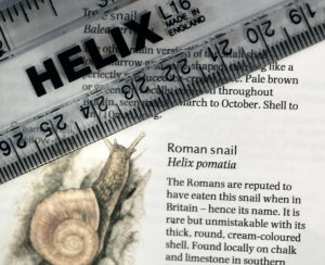 Get the measure of the foe before the fray  -  helix (pomatia) rules, ok?