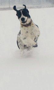 Snow hound, snow bound