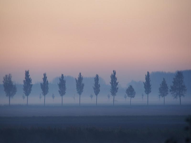 Fernhout landscape