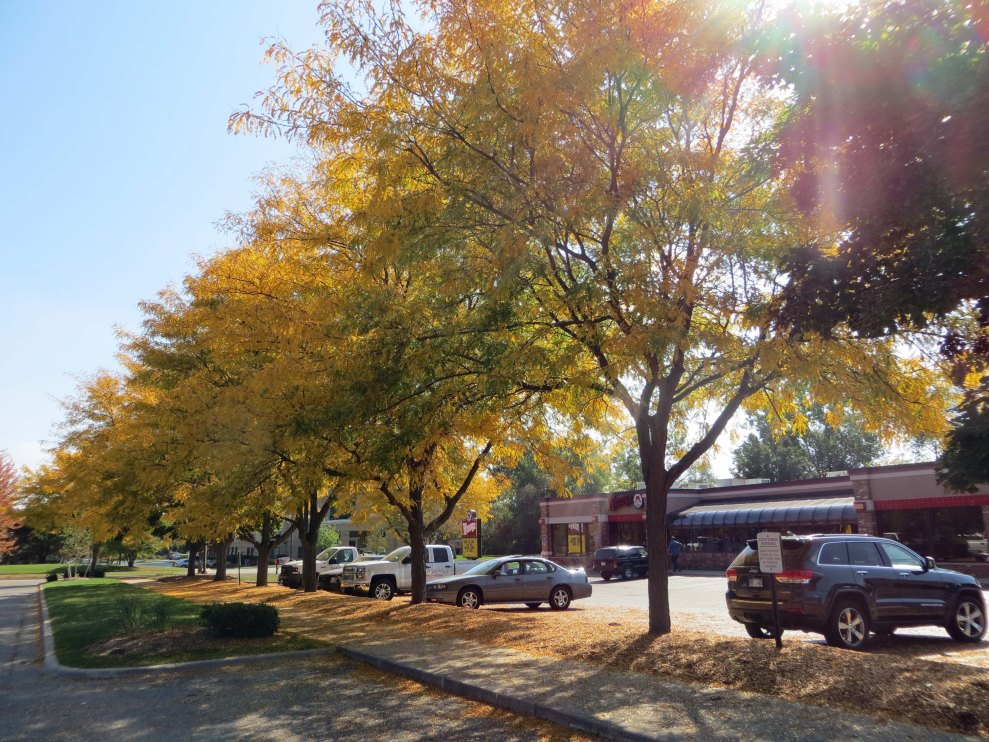 Ann Arbor 3