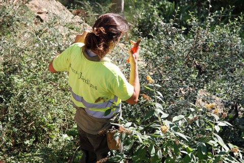 Park Güell: women repair, women prune, women dig and plant