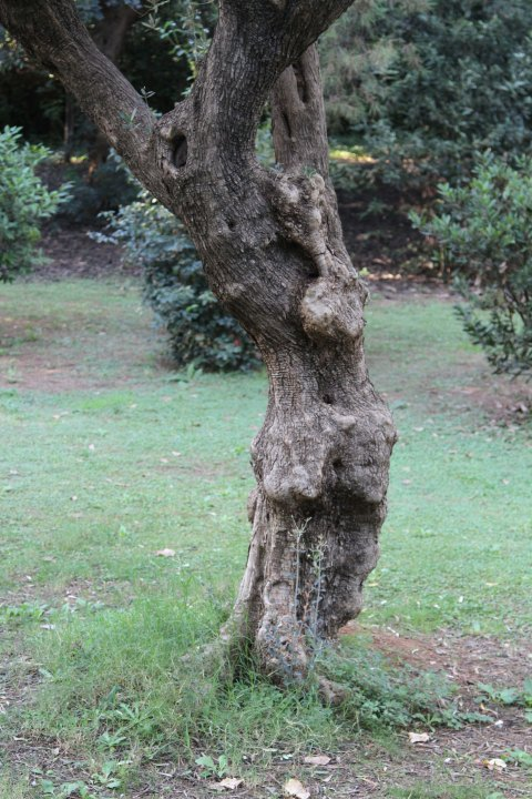 Parc de Pedralbes: tree sculpture